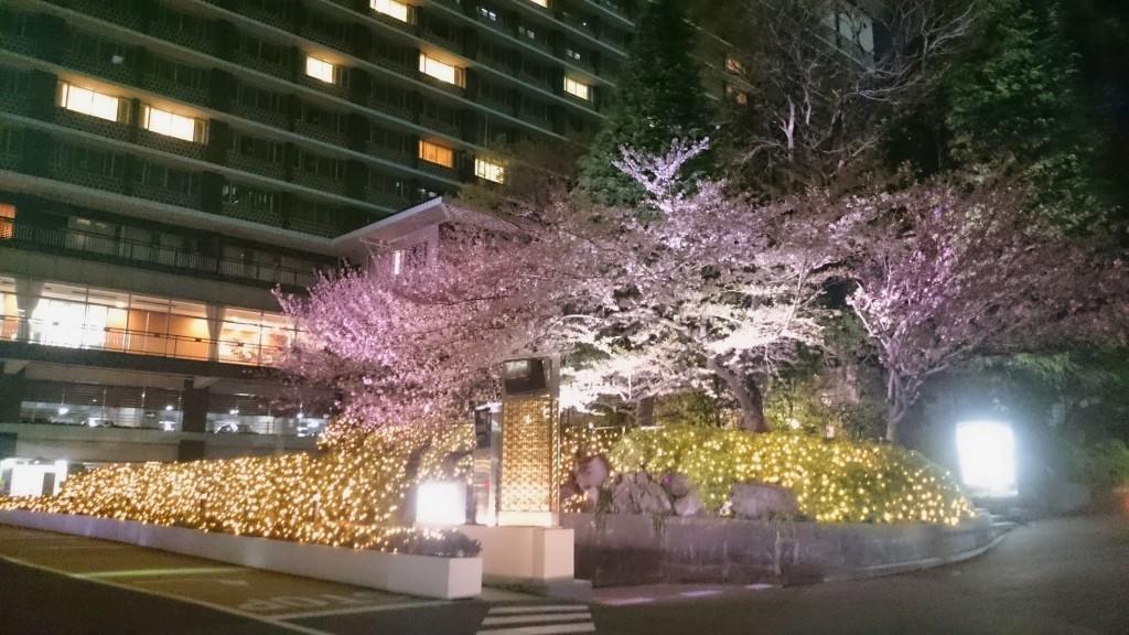 Sakura i Roppongi